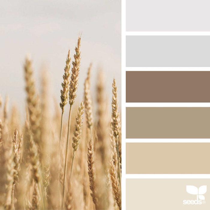 foto-natura-tavolozze-colori-design-seeds-colaluca-15