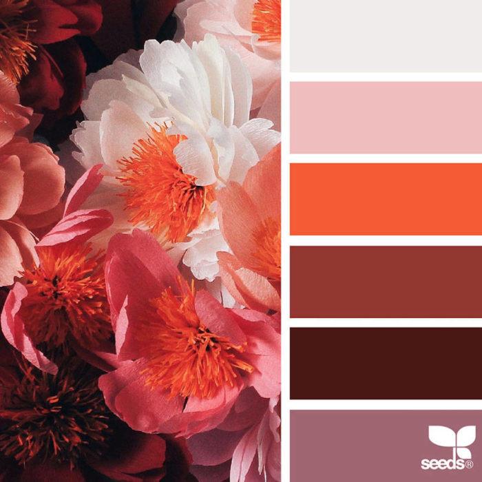 foto-natura-tavolozze-colori-design-seeds-colaluca-16