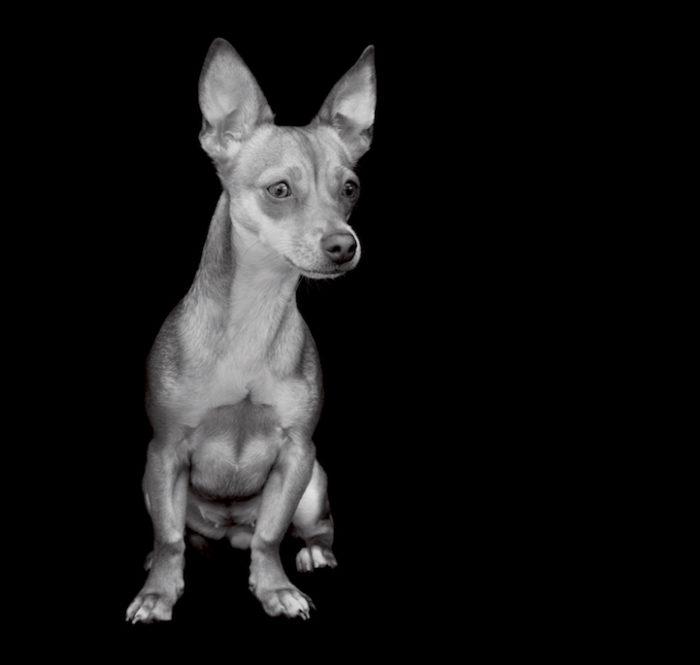 foto-ritratti-cani-adozione-finding-home-traer-scott-01
