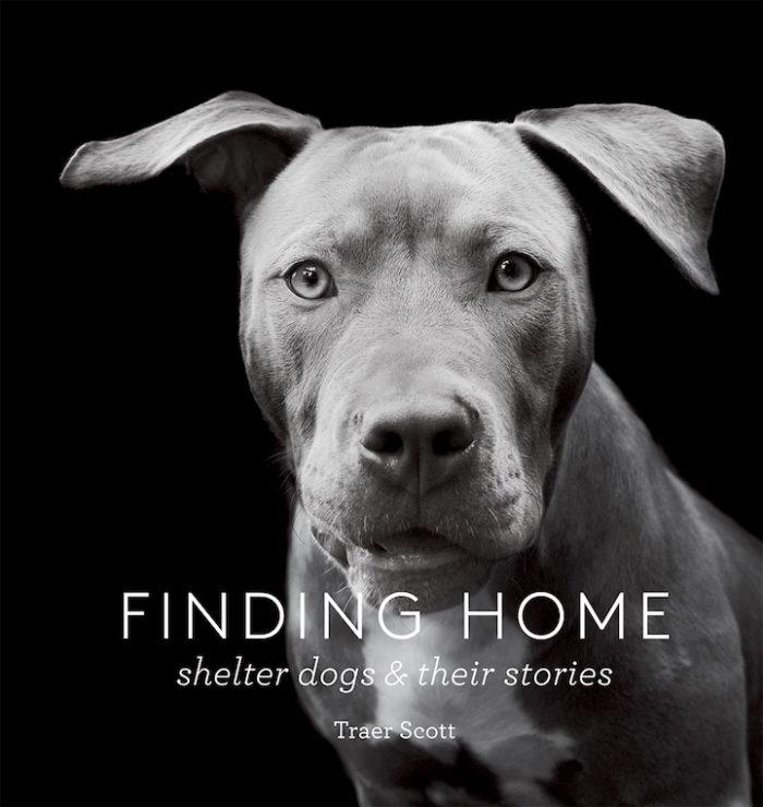 foto-ritratti-cani-adozione-finding-home-traer-scott-03