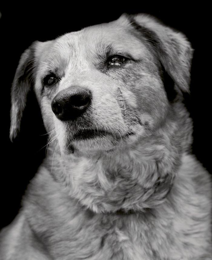 foto-ritratti-cani-adozione-finding-home-traer-scott-04
