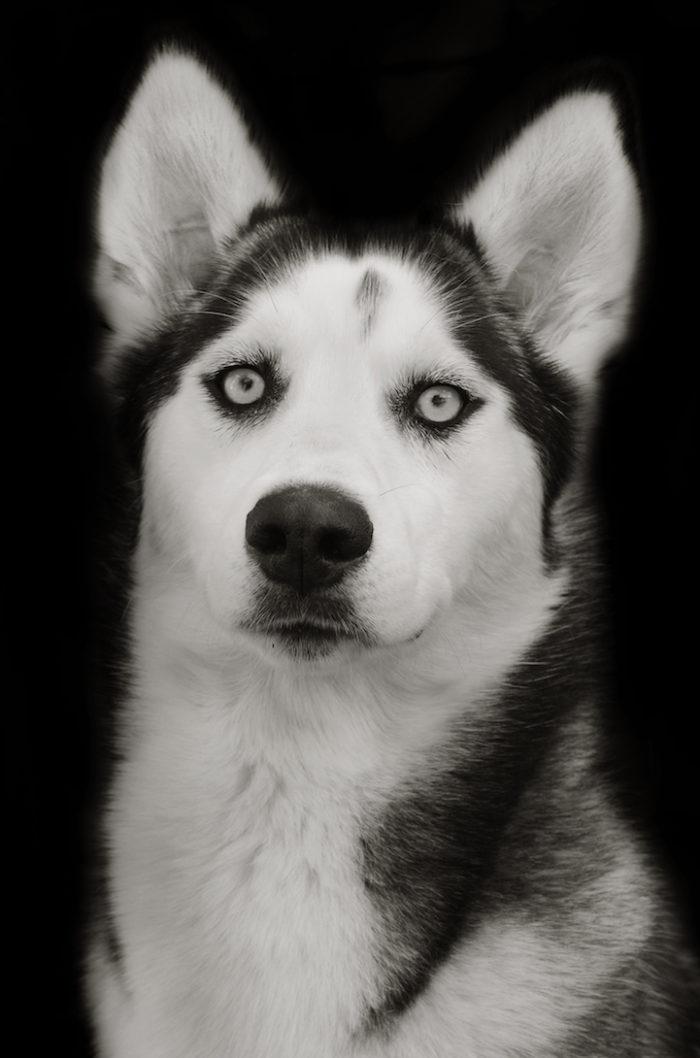 foto-ritratti-cani-adozione-finding-home-traer-scott-05