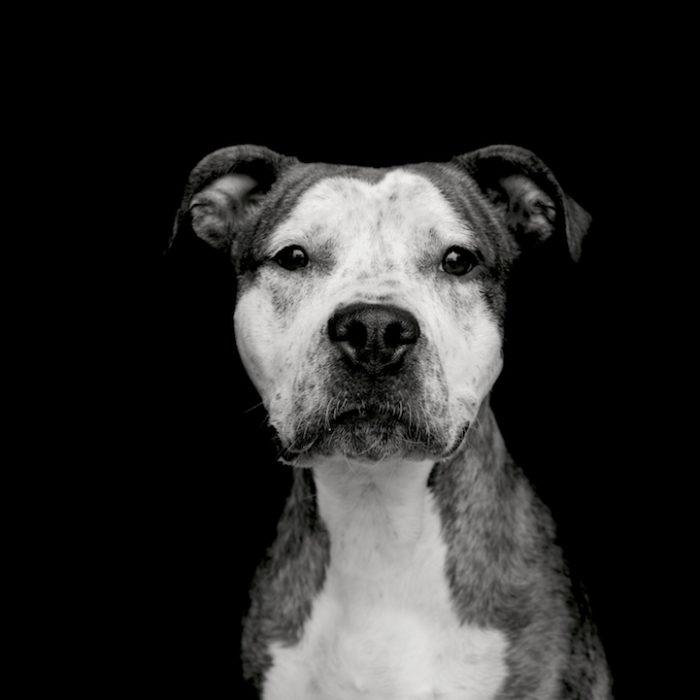 foto-ritratti-cani-adozione-finding-home-traer-scott-06