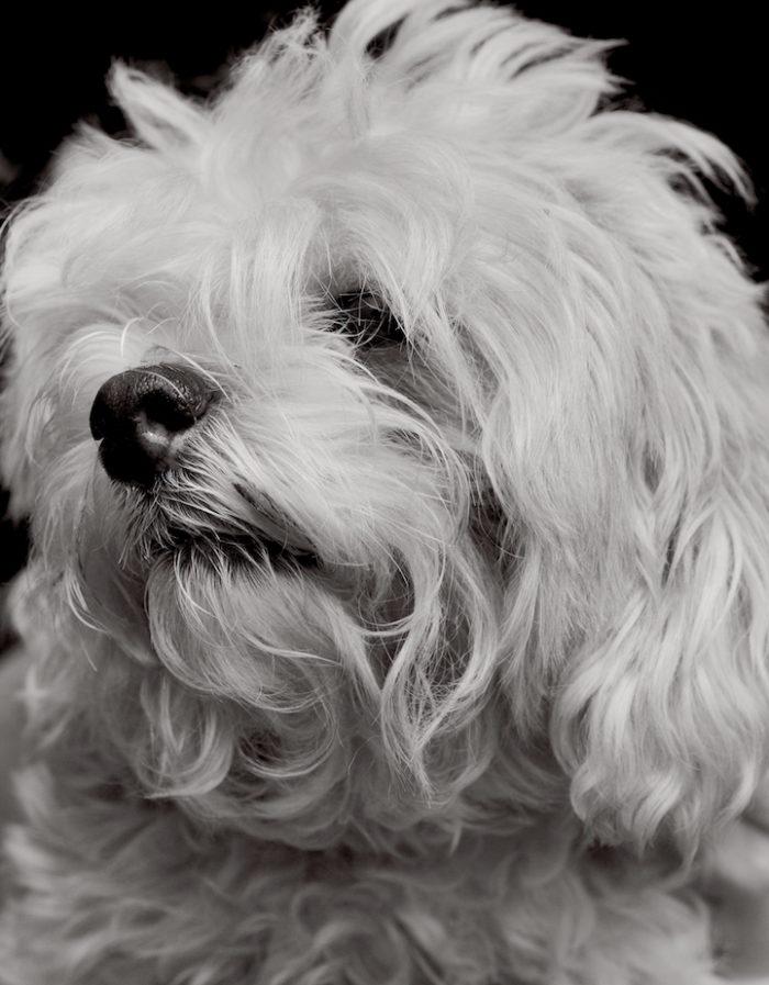 foto-ritratti-cani-adozione-finding-home-traer-scott-07