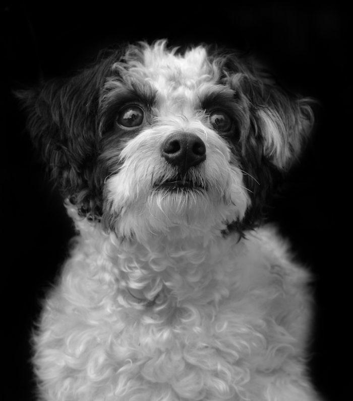 foto-ritratti-cani-adozione-finding-home-traer-scott-09