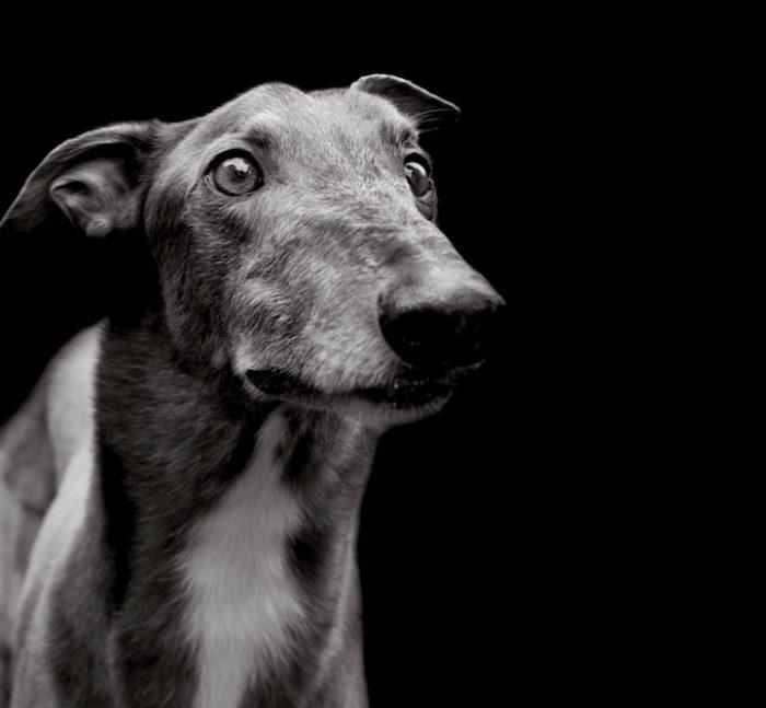 foto-ritratti-cani-adozione-finding-home-traer-scott-10