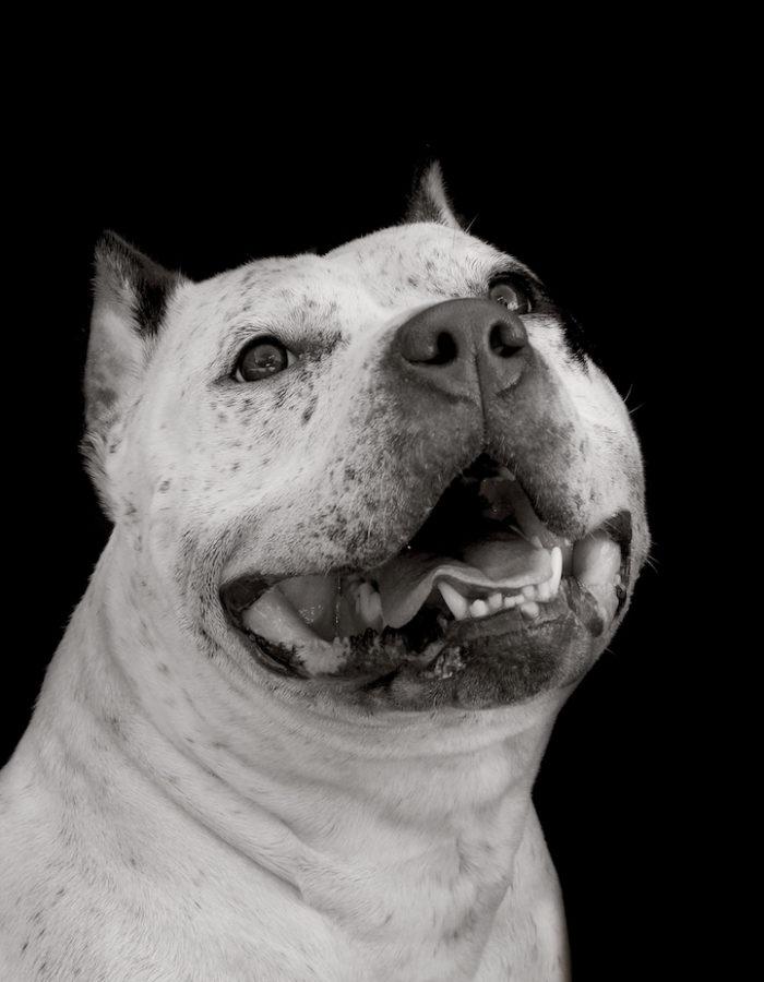 foto-ritratti-cani-adozione-finding-home-traer-scott-11