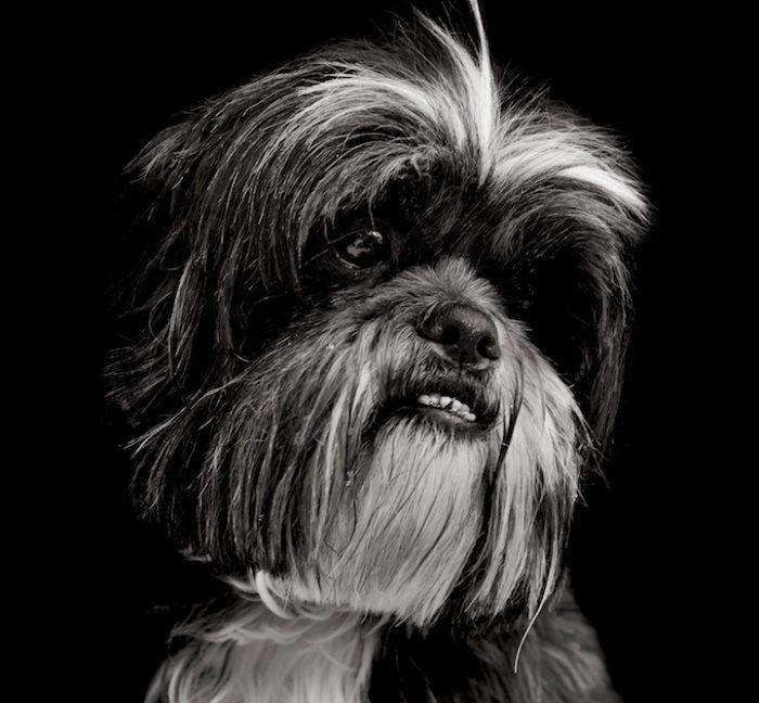 foto-ritratti-cani-adozione-finding-home-traer-scott-12