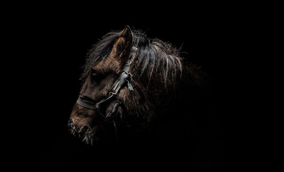 fotografia-ritratti-persone-animali-gods-and-beasts-remi-chapeaublanc-02