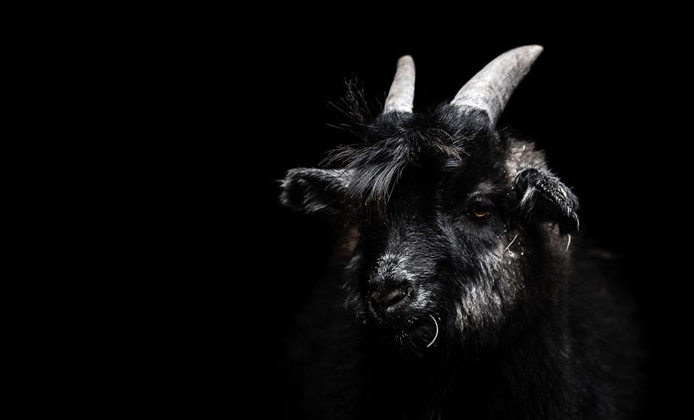 fotografia-ritratti-persone-animali-gods-and-beasts-remi-chapeaublanc-05