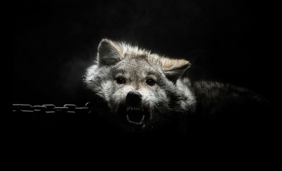 fotografia-ritratti-persone-animali-gods-and-beasts-remi-chapeaublanc-10