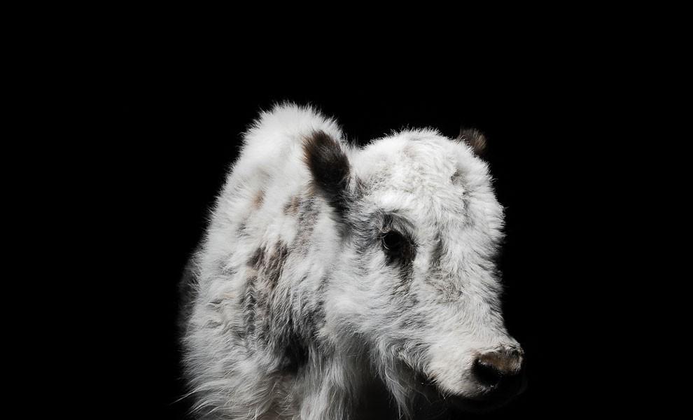 fotografia-ritratti-persone-animali-gods-and-beasts-remi-chapeaublanc-12