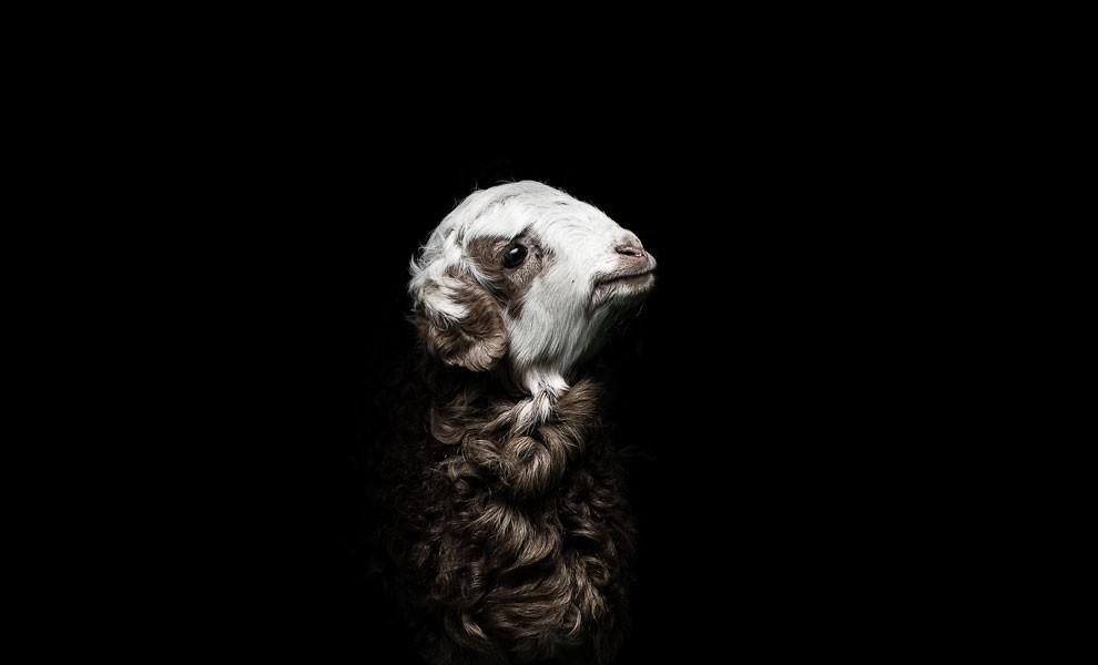fotografia-ritratti-persone-animali-gods-and-beasts-remi-chapeaublanc-15