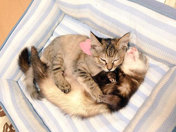 gattino-abbandonato-komari-furetti-fratelli-02