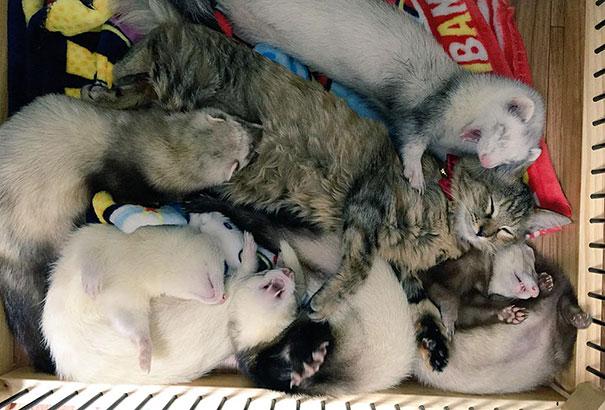 gattino-abbandonato-komari-furetti-fratelli-05