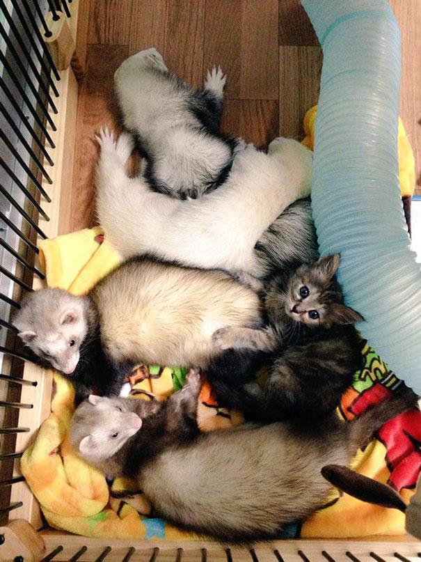 gattino-abbandonato-komari-furetti-fratelli-07