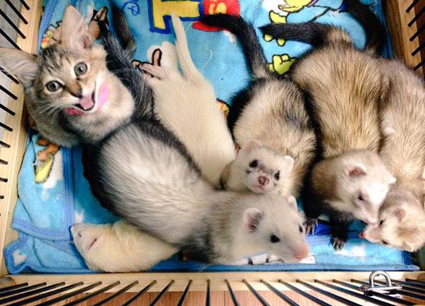gattino-abbandonato-komari-furetti-fratelli-08