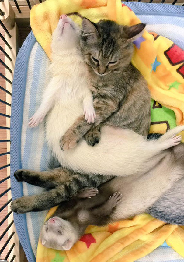 gattino-abbandonato-komari-furetti-fratelli-09