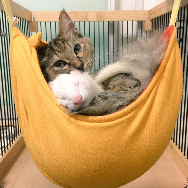 gattino-abbandonato-komari-furetti-fratelli-10