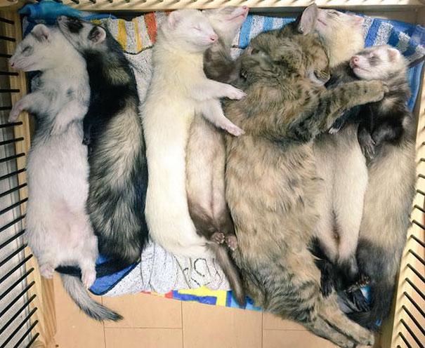 gattino-abbandonato-komari-furetti-fratelli-12