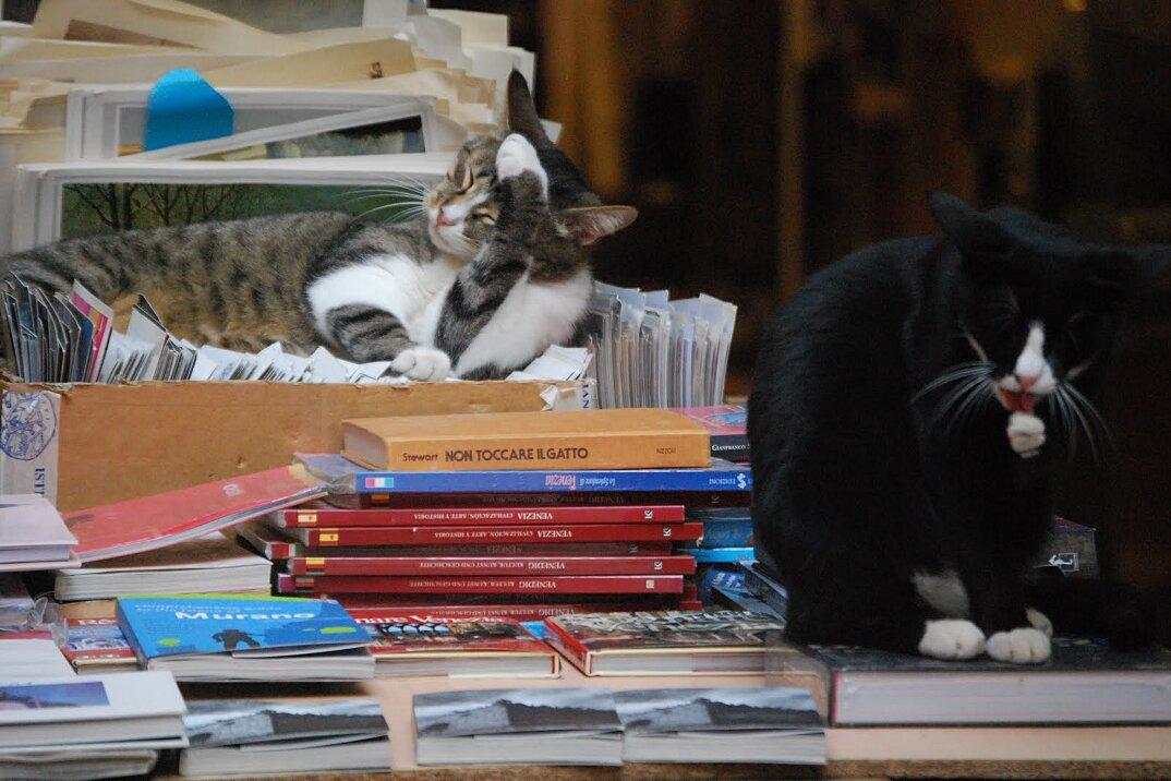 libreria-acqua-alta-venezia-8