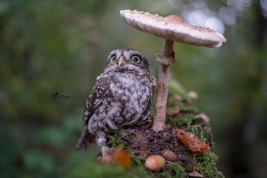 piccolo-gufo-pioggia-fungo-poldi-tanja-brandt-02