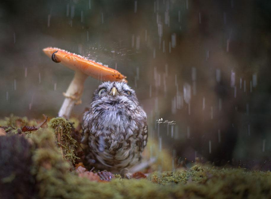 piccolo-gufo-pioggia-fungo-poldi-tanja-brandt-04