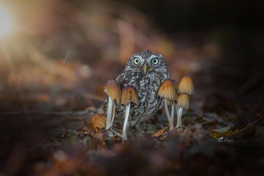 piccolo-gufo-pioggia-fungo-poldi-tanja-brandt-10
