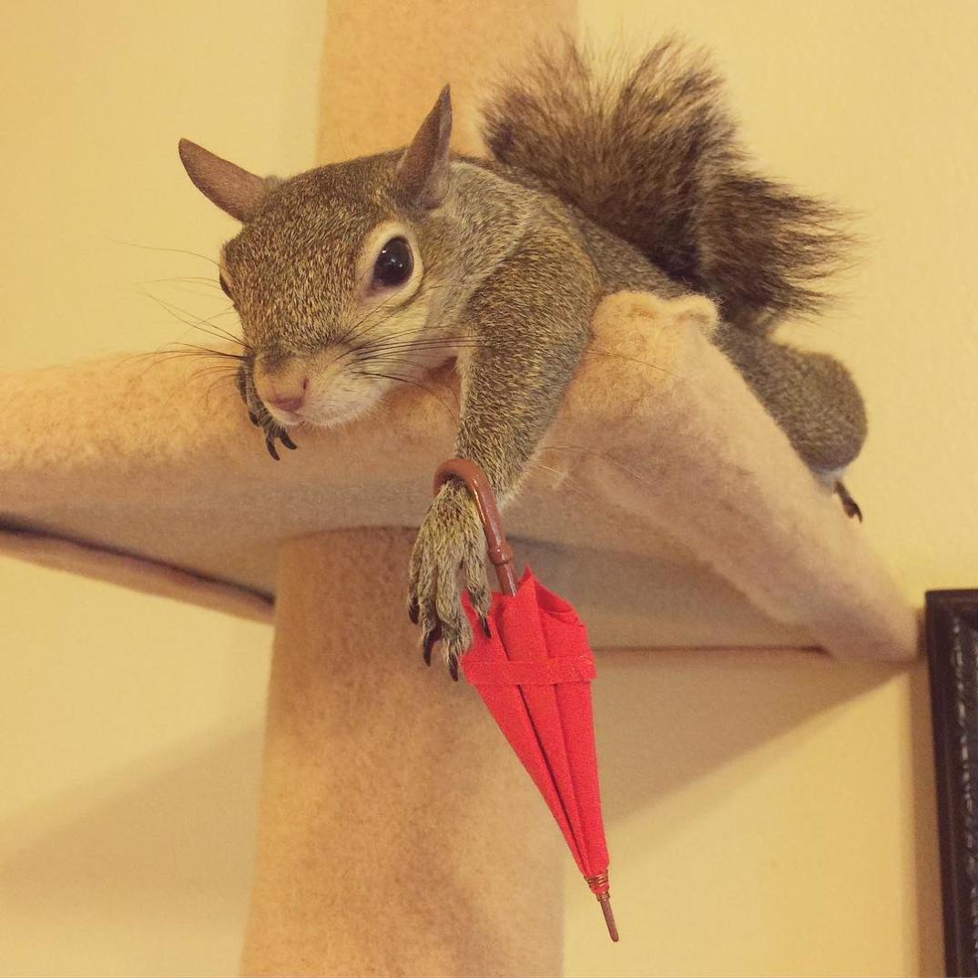 scoiattolo-fotogenico-salvato-jill-01
