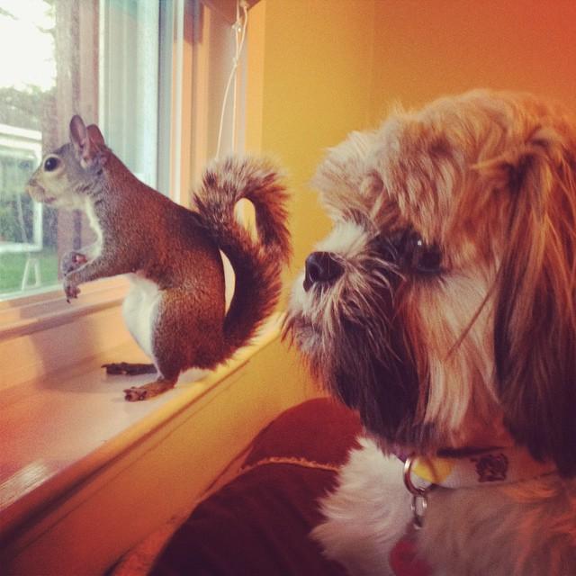 scoiattolo-fotogenico-salvato-jill-02