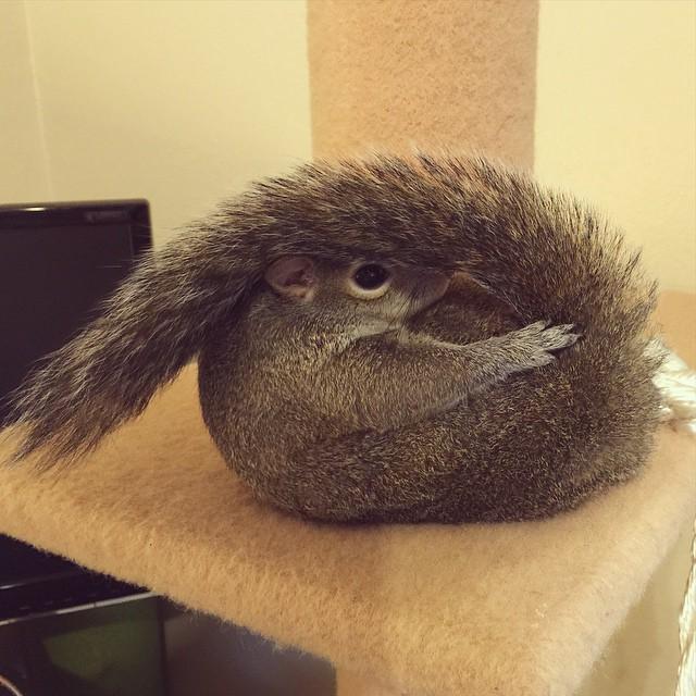 scoiattolo-fotogenico-salvato-jill-04