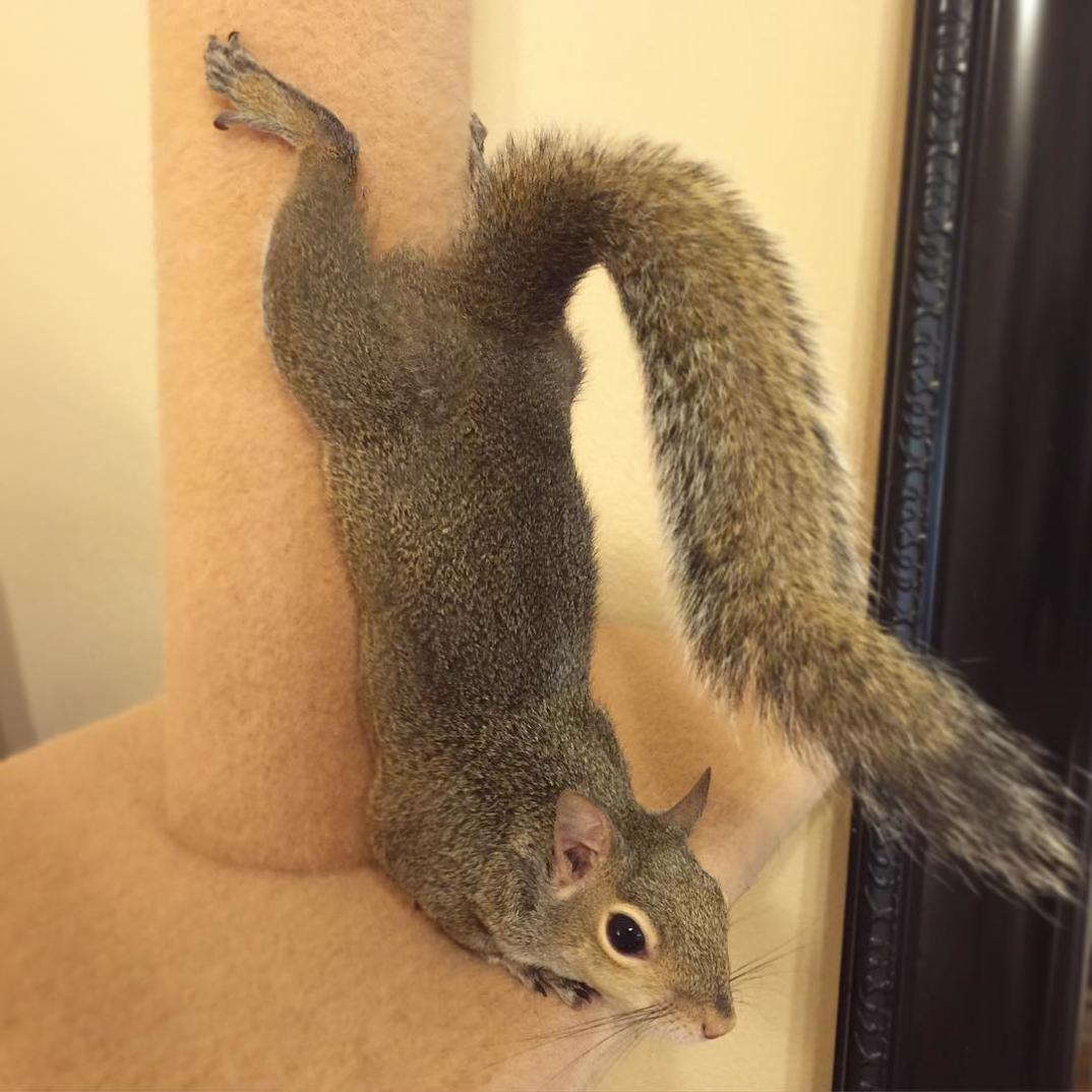 scoiattolo-fotogenico-salvato-jill-05