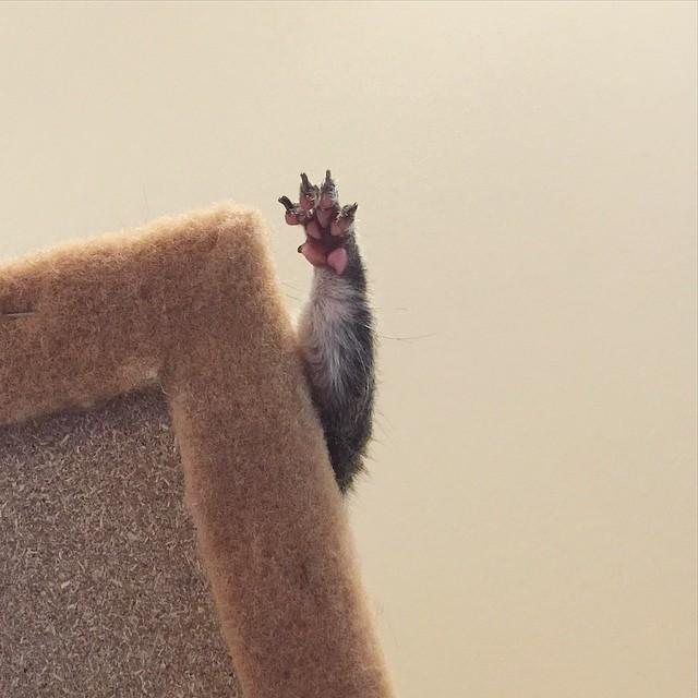 scoiattolo-fotogenico-salvato-jill-06