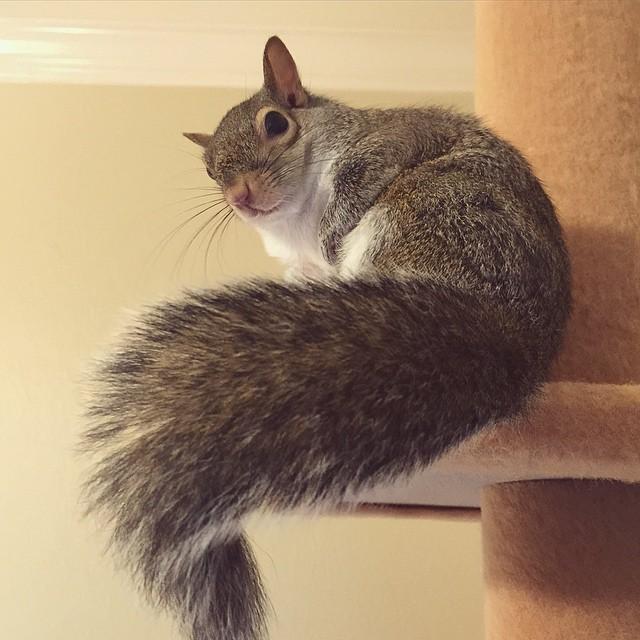 scoiattolo-fotogenico-salvato-jill-07