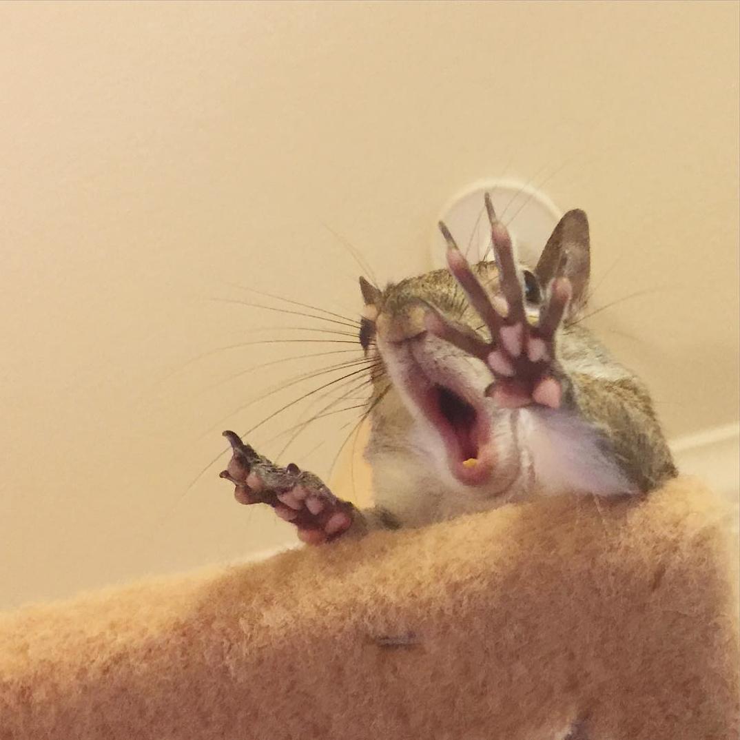 scoiattolo-fotogenico-salvato-jill-09
