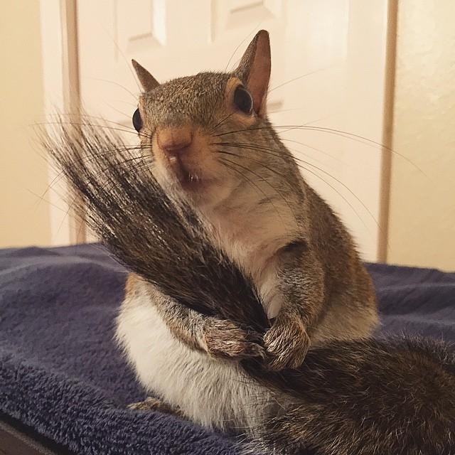 scoiattolo-fotogenico-salvato-jill-10