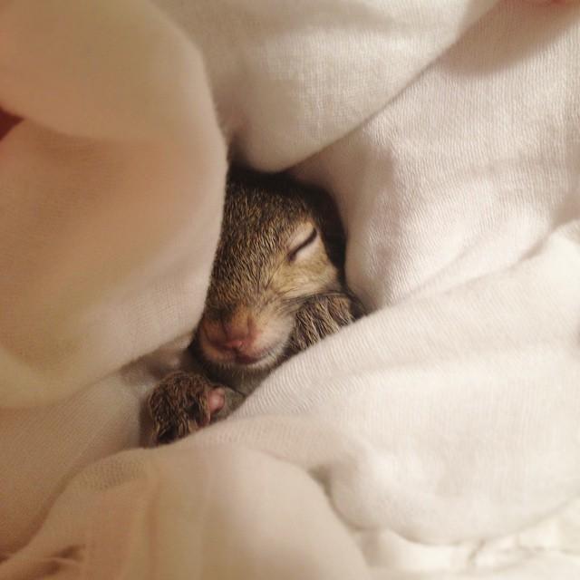 scoiattolo-fotogenico-salvato-jill-11