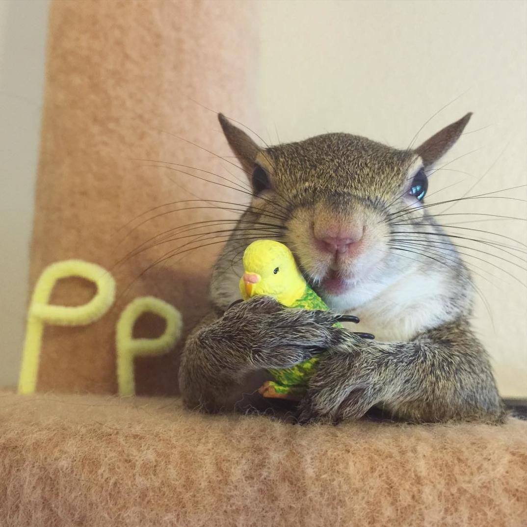 scoiattolo-fotogenico-salvato-jill-12