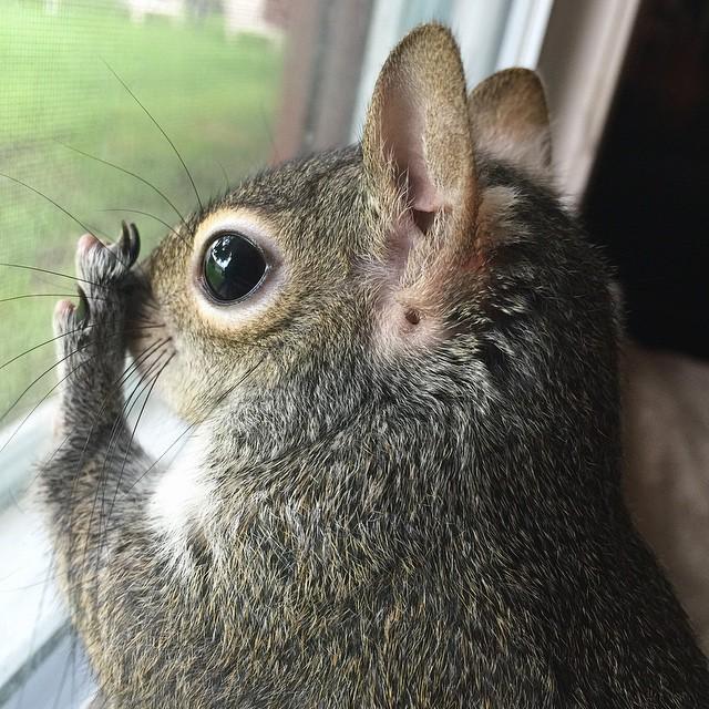 scoiattolo-fotogenico-salvato-jill-13