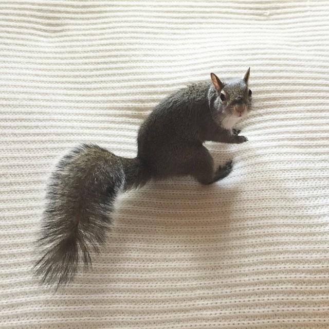 scoiattolo-fotogenico-salvato-jill-14