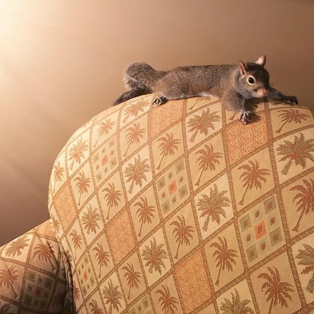 scoiattolo-fotogenico-salvato-jill-15