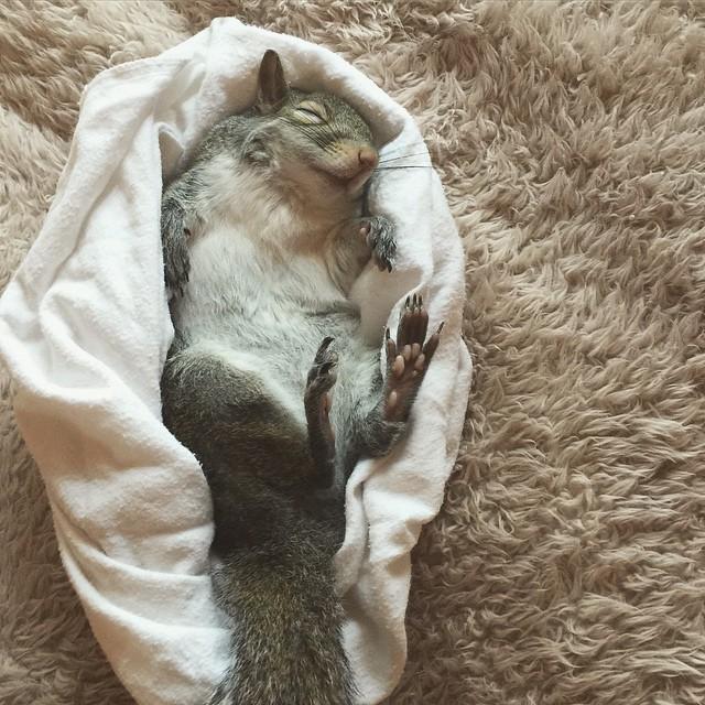 scoiattolo-fotogenico-salvato-jill-16