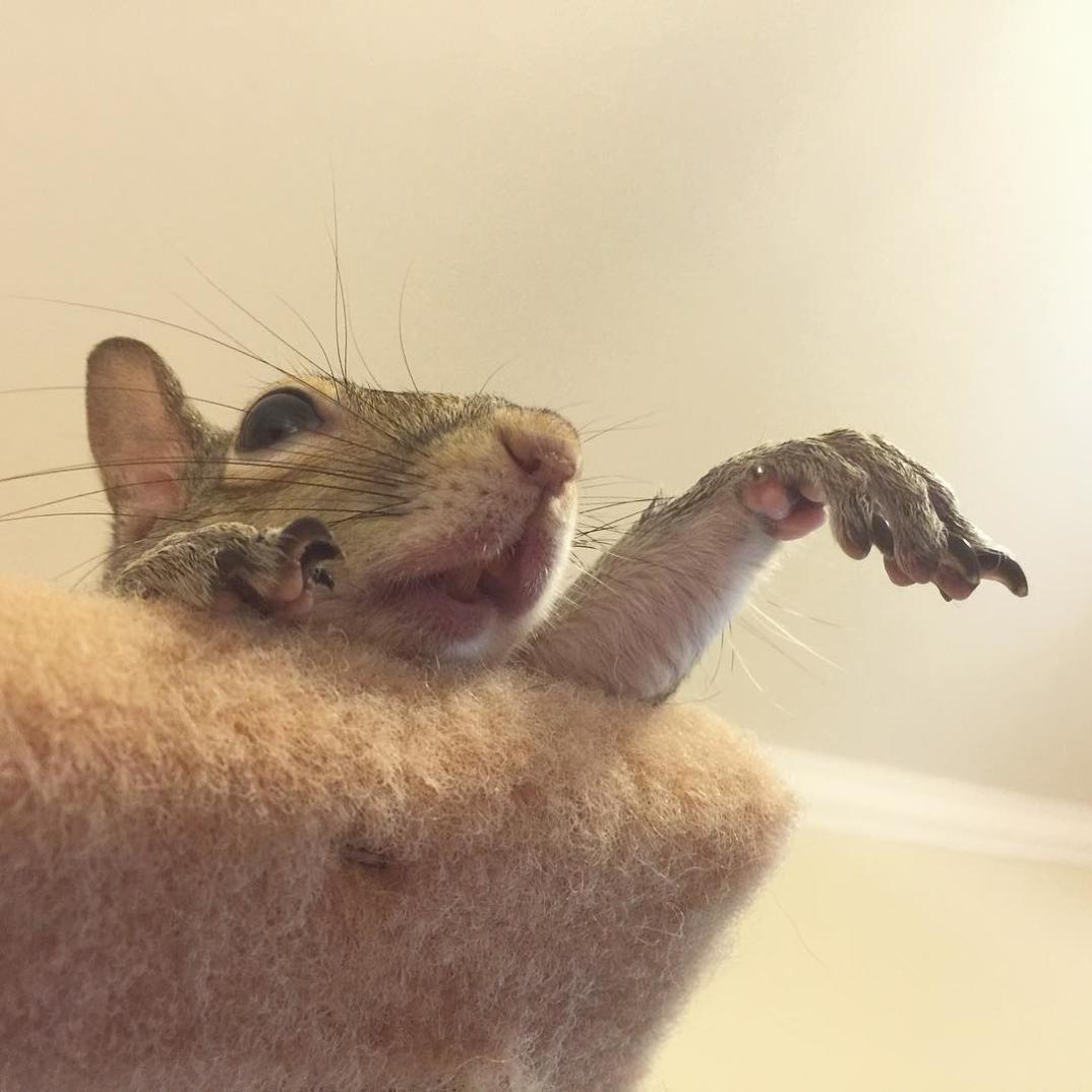 scoiattolo-fotogenico-salvato-jill-17