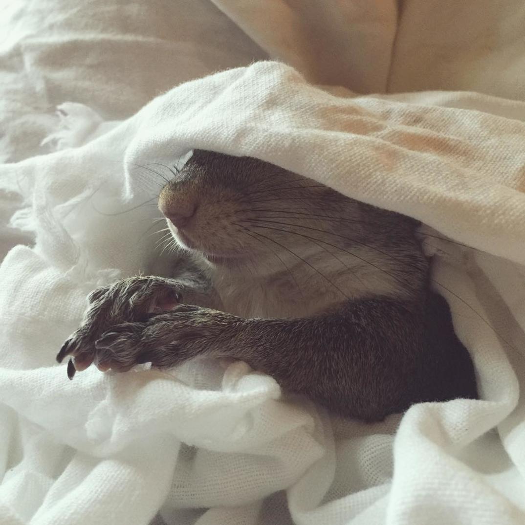 scoiattolo-fotogenico-salvato-jill-18