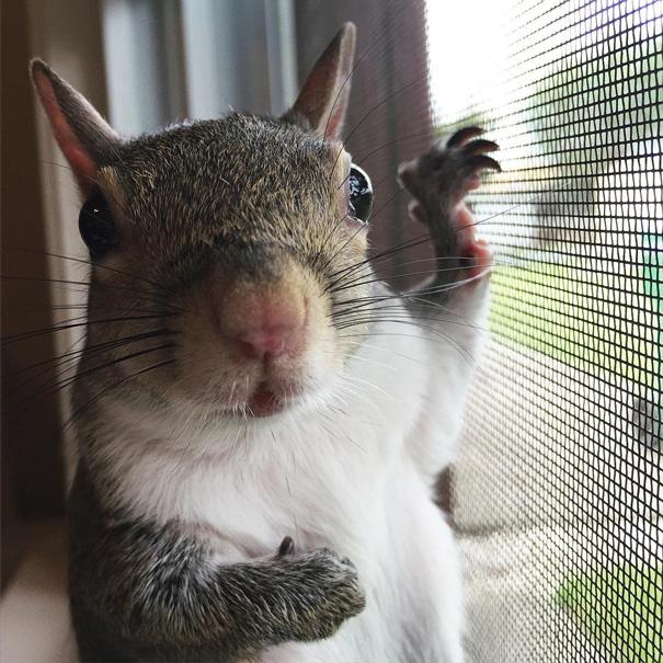 scoiattolo-fotogenico-salvato-jill-19