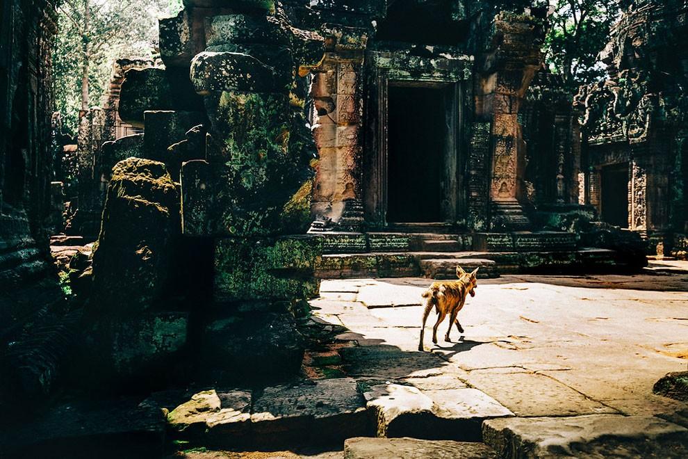 templi-cambogia-fotografia-alex-teuscher-10