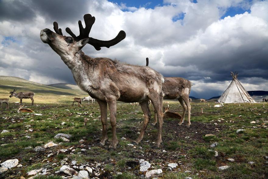 tsaatan-popolo-nomadi-mongolia-renne-01