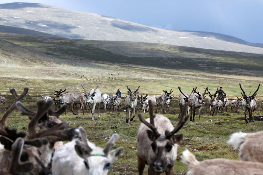 tsaatan-popolo-nomadi-mongolia-renne-05