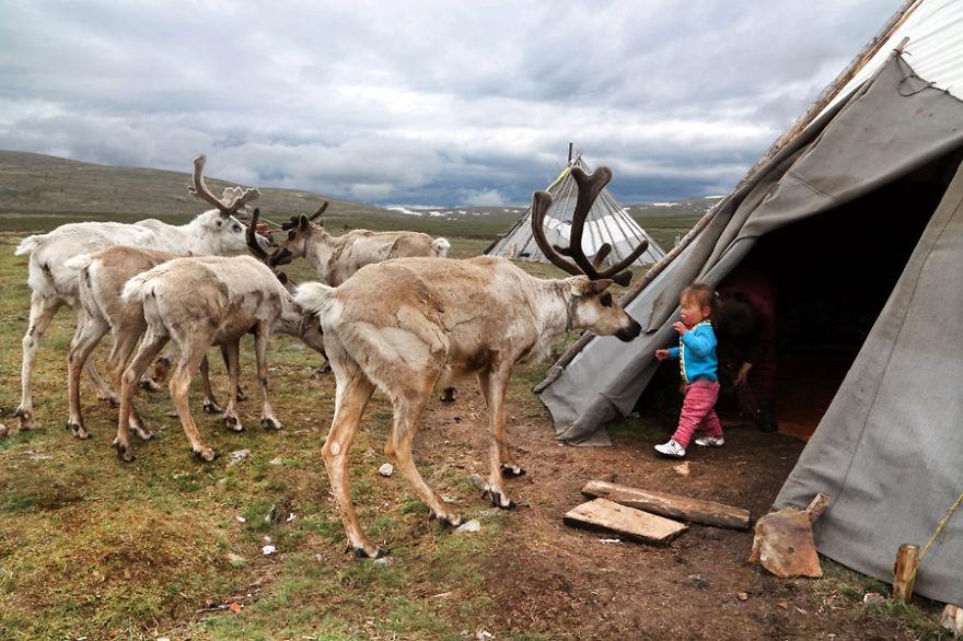 tsaatan-popolo-nomadi-mongolia-renne-06