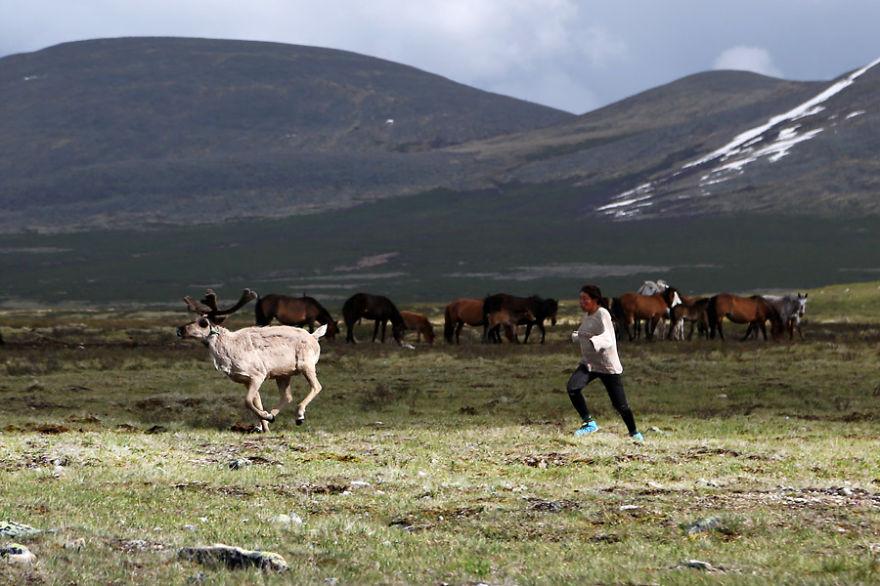 tsaatan-popolo-nomadi-mongolia-renne-07